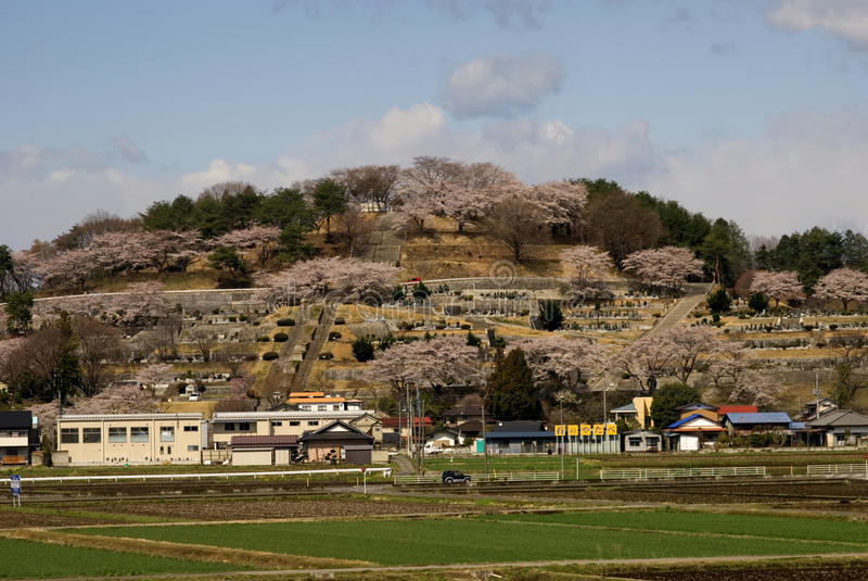 Kirschblüte, Honshu, Japan stockfoto