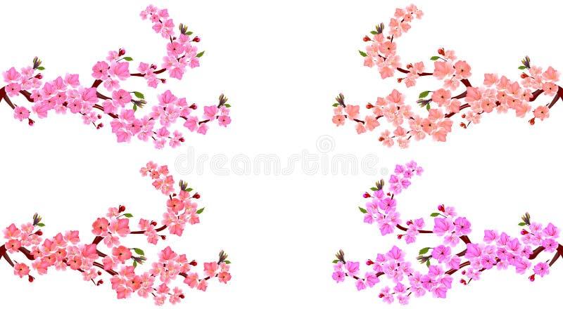 Kirschblüte set E r Auf einem weißen Hintergrund Abbildung vektor abbildung
