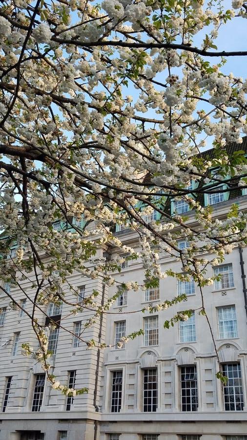 Kirschblüte-Szene lizenzfreie stockfotografie