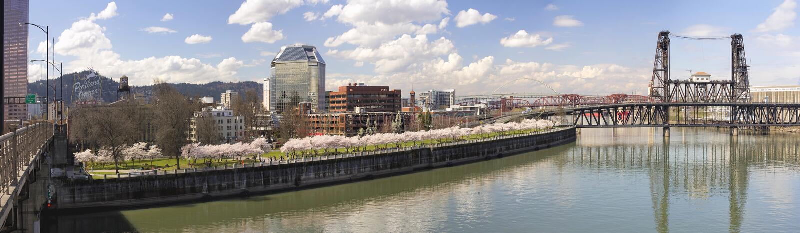 Kirschblüte entlang Ufergegend-Panorama Portlands Oregon stockfoto