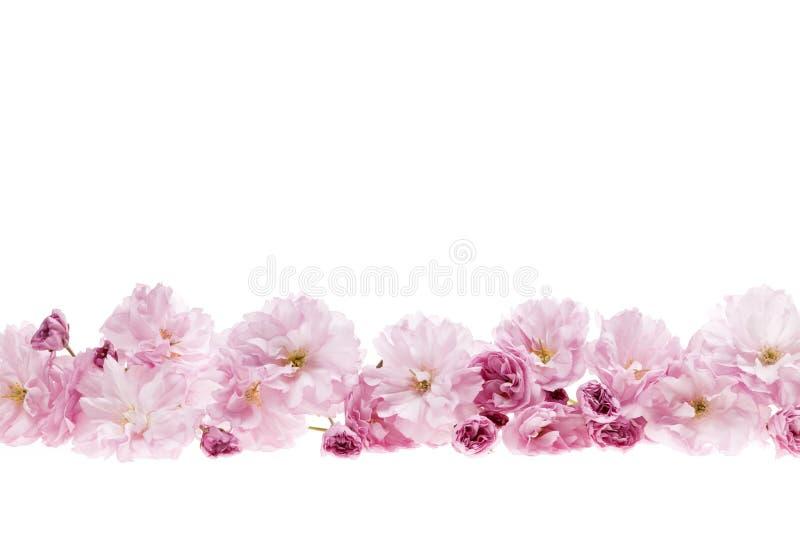 Kirschblüten-Blumengrenze stockbilder