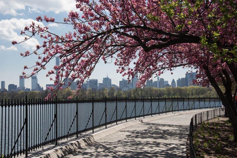 Kirschblüten entlang dem Central Park-Reservoir lizenzfreies stockfoto
