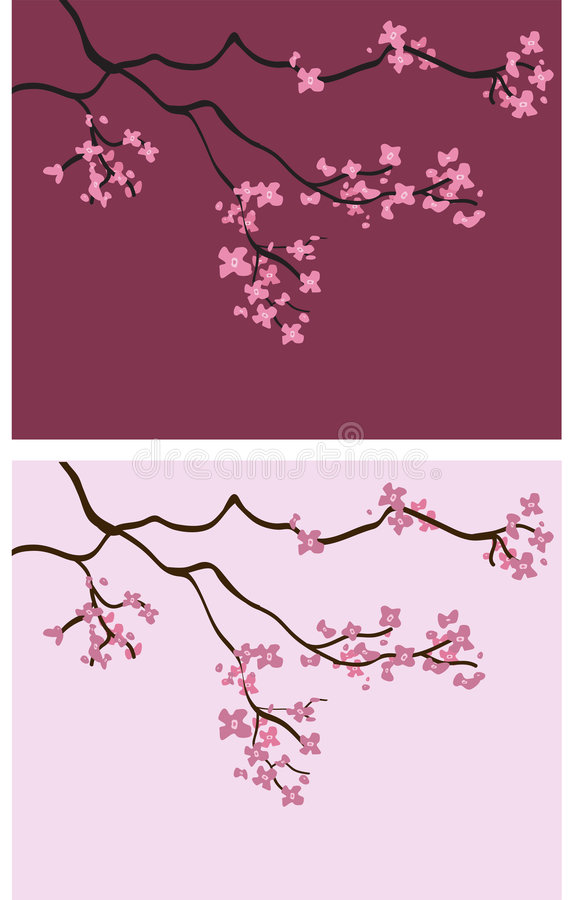 Kirschblüten-Hintergründe - vektorabbildung vektor abbildung