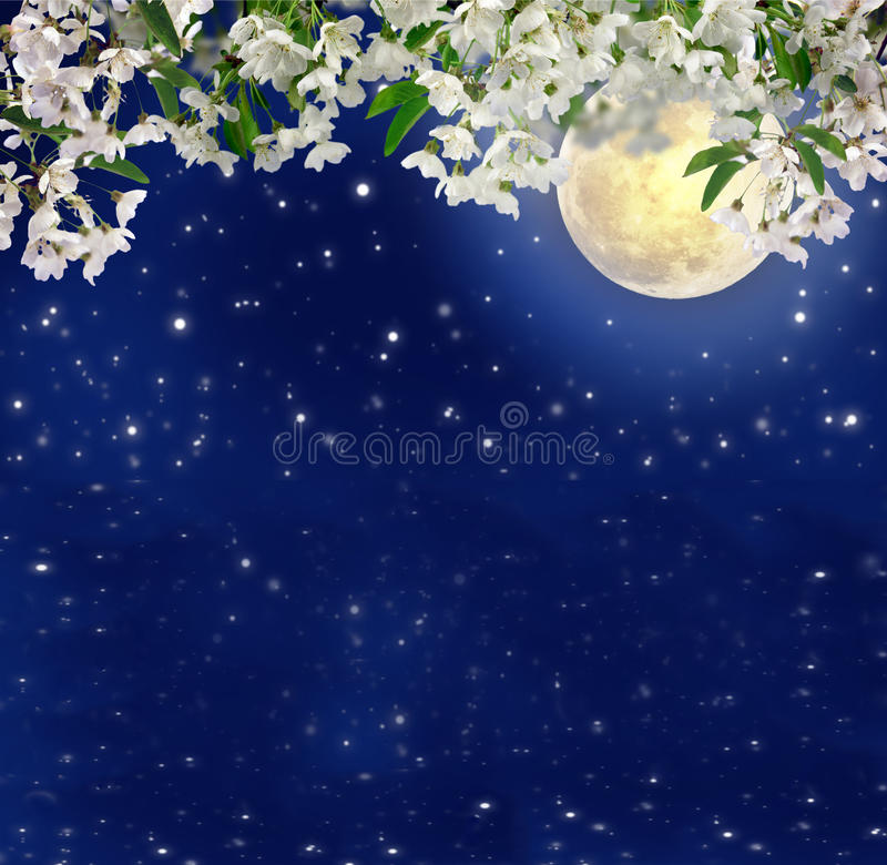 Kirschblüten im Mondschein Frühlingsnacht mystiker Volles MOO lizenzfreie abbildung