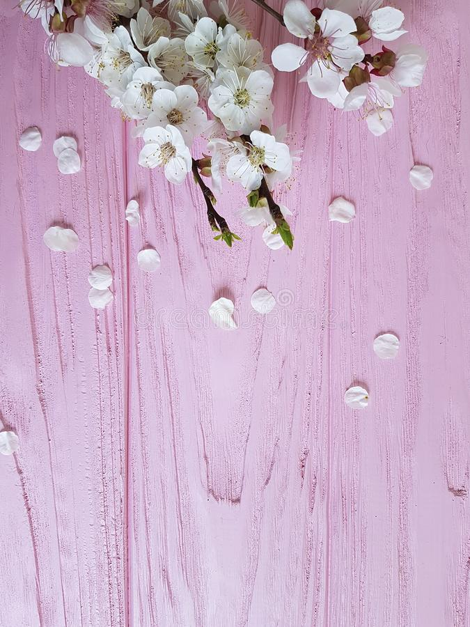 Kirschblüten-Niederlassungsdekor-Weinlesefrühling auf einem rosa hölzernen Hintergrund lizenzfreies stockfoto