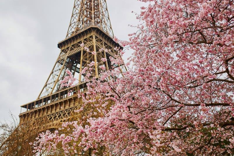Blossoms Tour 2017