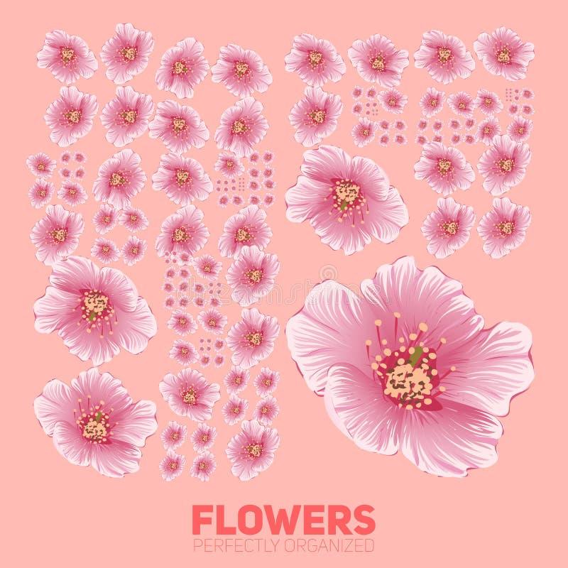 Kirschblütenblumen tadellos organisiert Vector Kirschblüte-Blumen, die ordentlich durch das Gitter organisiert werden Begriffsblu lizenzfreie abbildung