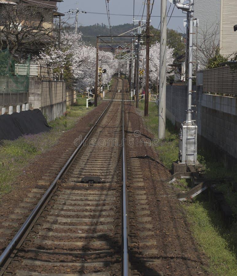 Kirschblütentunnel, Keifuku-Linie, Arashiyama, Kyoto aus dem Zug am sonnigen Tag in Kyoto heraus stockbild