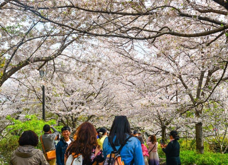 Kirschbl?te in Tokyo, Japan lizenzfreie stockfotos