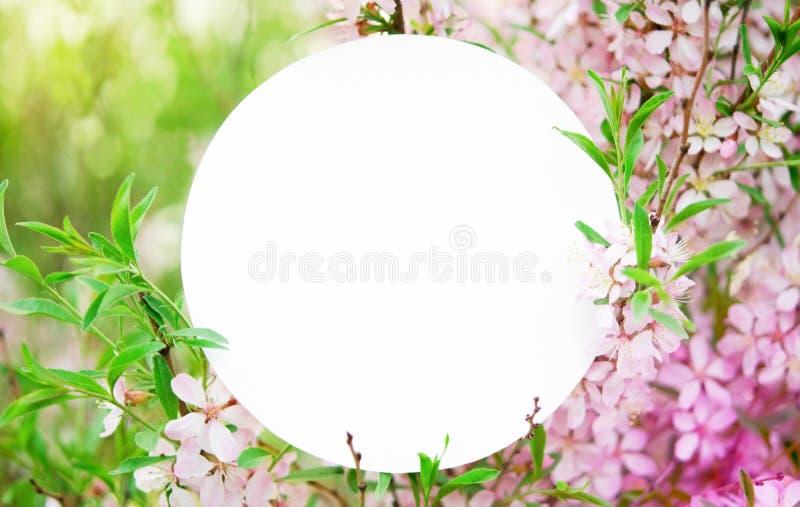 Kirschbl?ten in der vollen Bl?te Kreativer Plan gemacht von den Blumen und von den Blättern mit runder Papierkarte lizenzfreie stockfotos