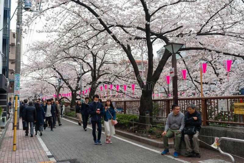 Kirschbl?tenfestival in voller Bl?te in Meguro-Fluss Meguro-Fluss ist einer des besten Platzes, zum er zu genie?en stockfoto