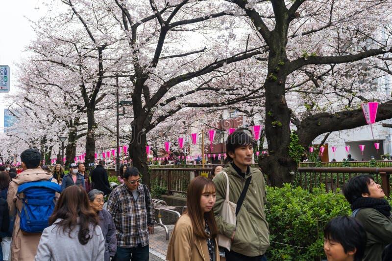 Kirschbl?tenfestival in voller Bl?te in Meguro-Fluss Meguro-Fluss ist einer des besten Platzes, zum er zu genie?en stockfotografie