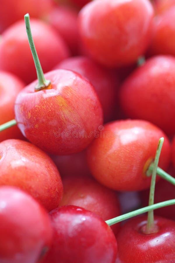 Kirschfrüchte mit Blättern lizenzfreies stockfoto