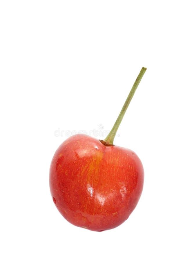 Kirschfrüchte mit Blättern lizenzfreie stockfotos
