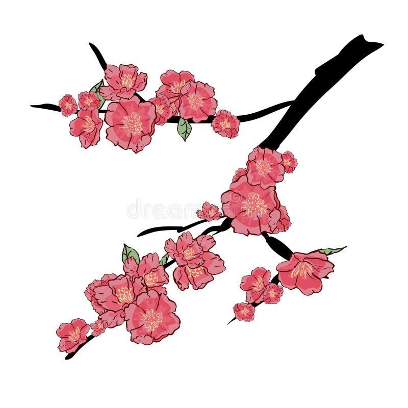Kirschniederlassung Kirschblütes Japan mit dem Blühen blüht Vektorillustration Handzeichnung, lokalisiert auf weißem Hintergrund vektor abbildung