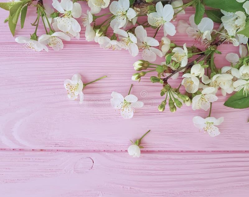 Kirschschönheits-Blütendesign auf einem rosa hölzernen Hintergrund, Frühling lizenzfreie stockfotos