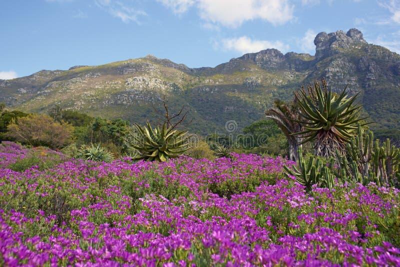 Kirstenbosch fotografie stock