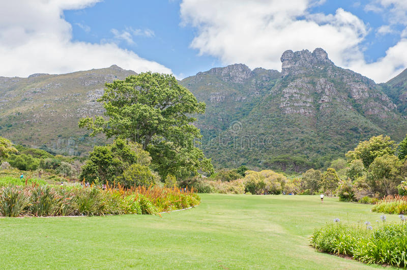 Download Kirstenbosch Botanical Gardens And Castle Rocks On Table Mountai  Editorial Photo   Image Of Town