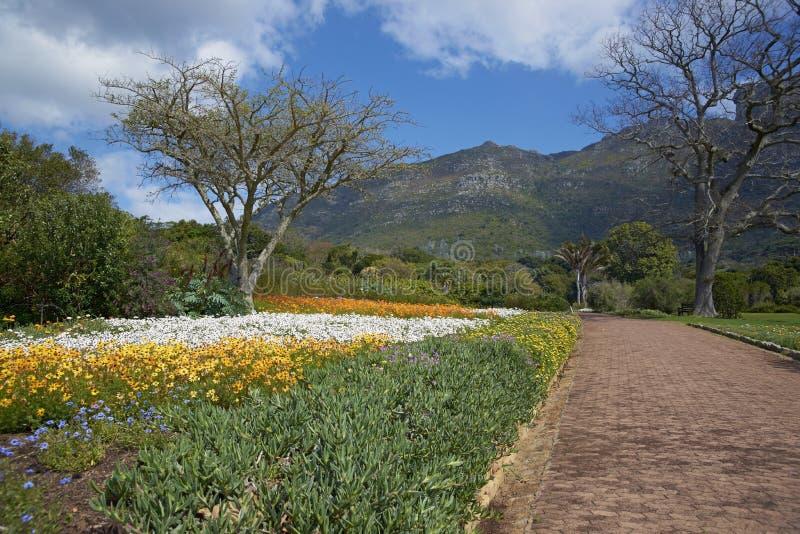 Kirstenbosch Gärten stockfotografie