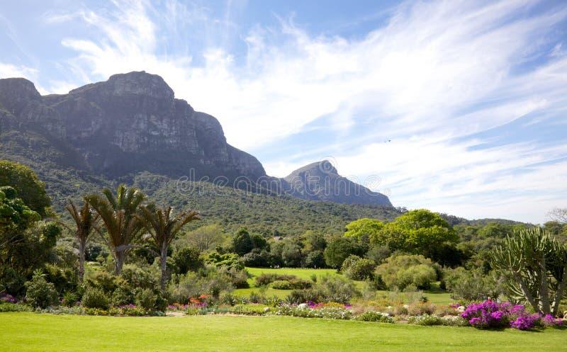 Kirstenbosch Gardens royalty free stock image