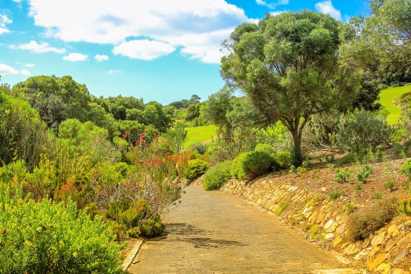 Kirstenbosch w Kapsztad fotografia royalty free