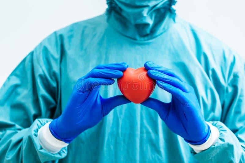 Kirurg som rymmer en hjärta Mänsklig hjärtamodell för anatomi arkivbild