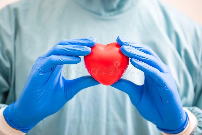 Kirurg som rymmer en hjärta Mänsklig hjärtamodell för anatomi royaltyfri foto