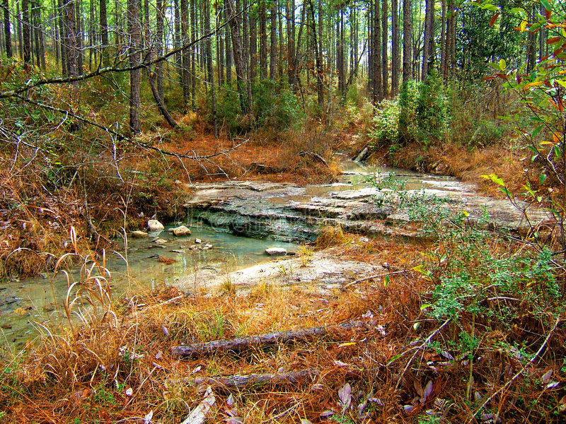 kisatchie dzikiej creek obrazy royalty free