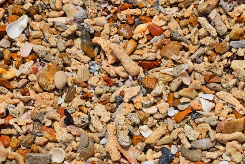 Kiselstenar, stenar, koraller och skal för havskust royaltyfria bilder