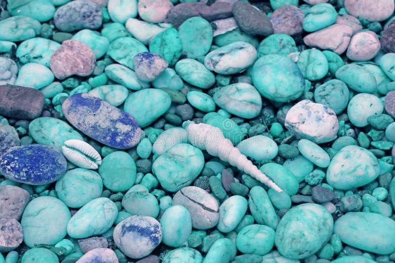 Kiselstenen stenar banan med mycket sm? sn?ckskal p? stranden i pastellf?rgad bl? signal arkivfoto