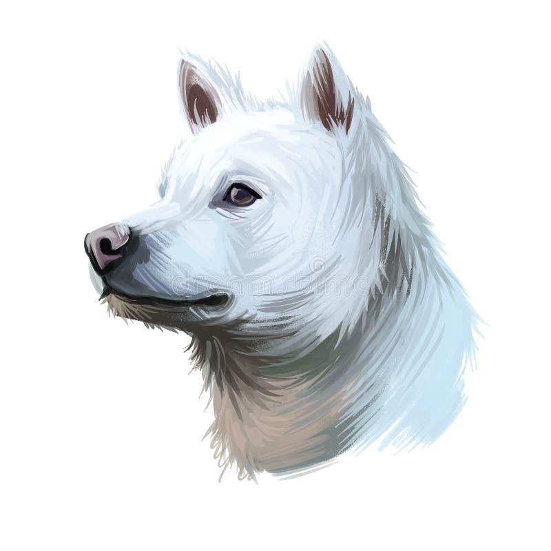 Kishu Ken, Kishu-Ken, Kishu-Inu, Kishu dog digital art illustration isolated on white background. Japan origin asian spitz dog. stock illustration