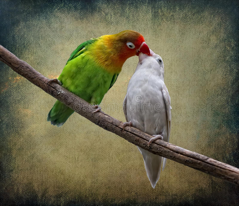 Download The Kiss stock photo. Image of romantic, romance, bird - 19414240
