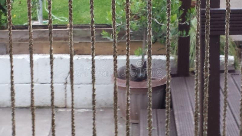 Kisse i en kruka royaltyfria bilder