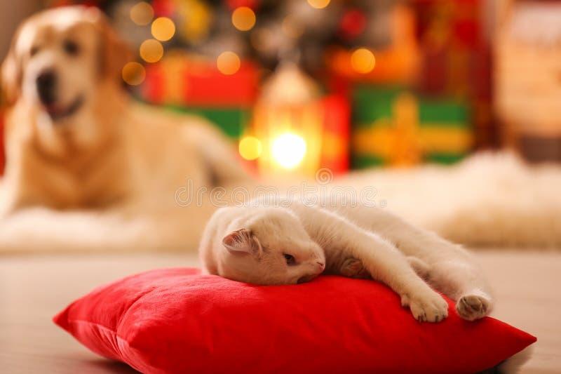 Kissen auf Kissen in den Zimmern, die für Weihnachten dekoriert sind, und Hund verschwommener Hunde Adlige Haustiere stockbilder