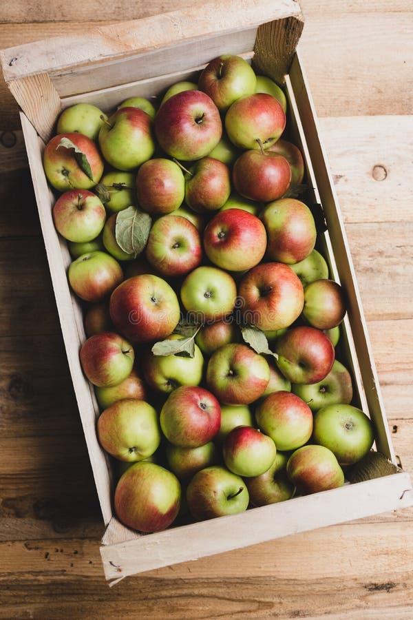 Kiste voll Äpfel lizenzfreies stockfoto