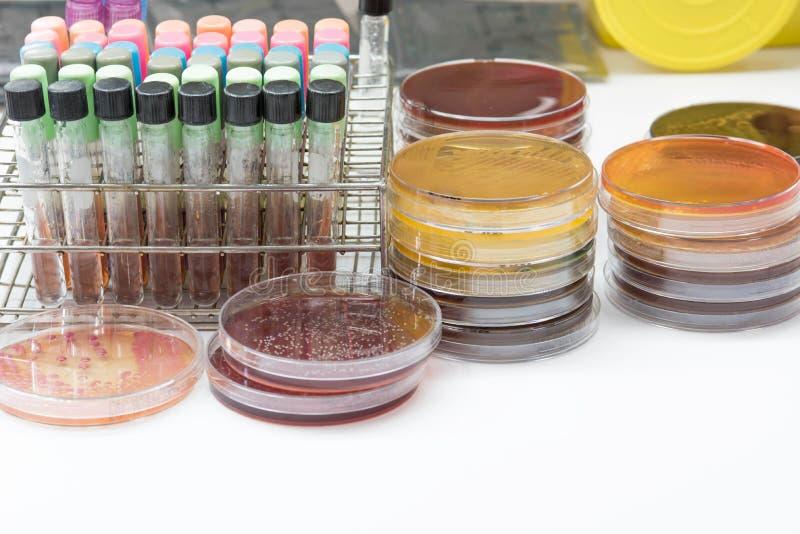 Kit d'essai de biochimie photo libre de droits