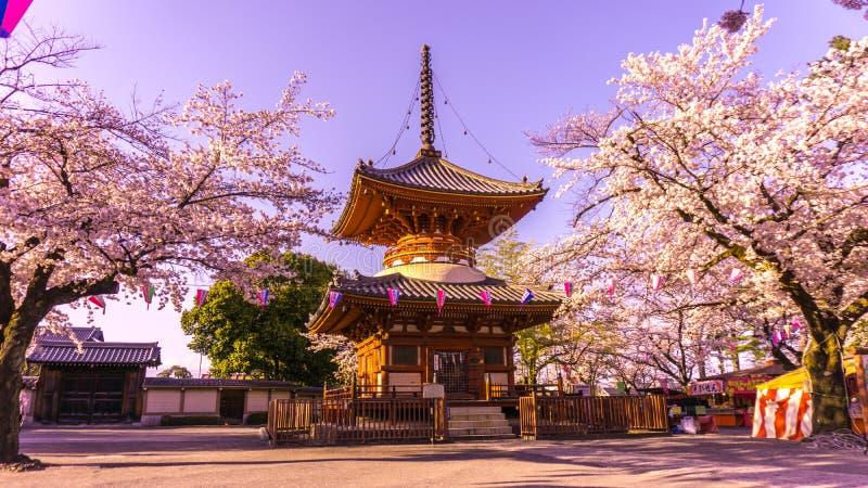 Kitain寺庙在Kawagoe镇埼玉的春天在日本 免版税库存照片