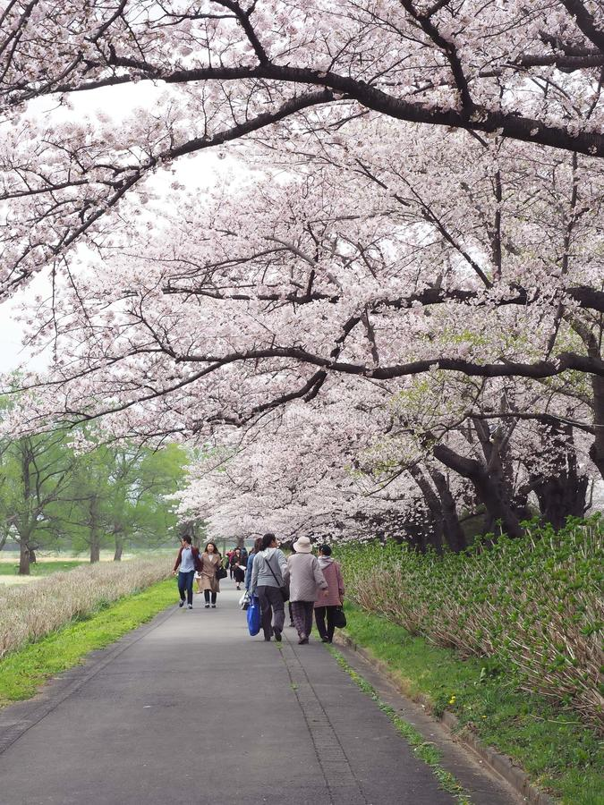 Kitakami, prefectura de Iwate, Japón foto de archivo libre de regalías