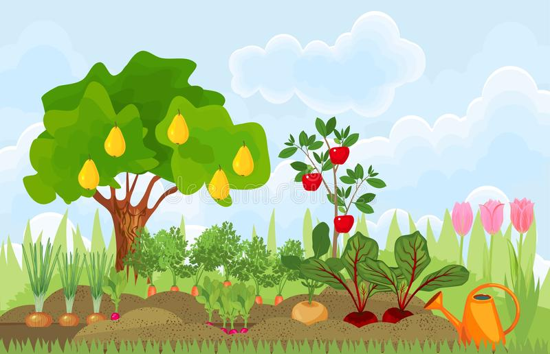Kitchen garden or vegetable garden with different vegetables, fruit trees and tulips. Kitchen garden or vegetable garden with different ripe vegetables, fruit royalty free illustration