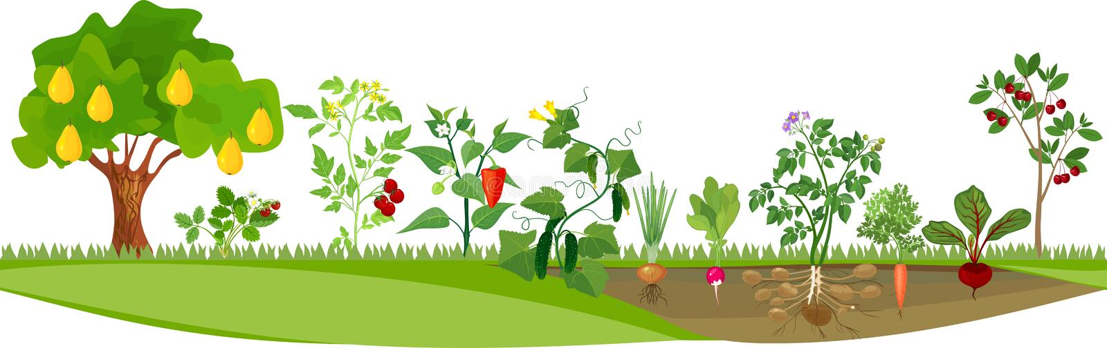 Kitchen garden or vegetable garden with different vegetables and fruit trees stock illustration