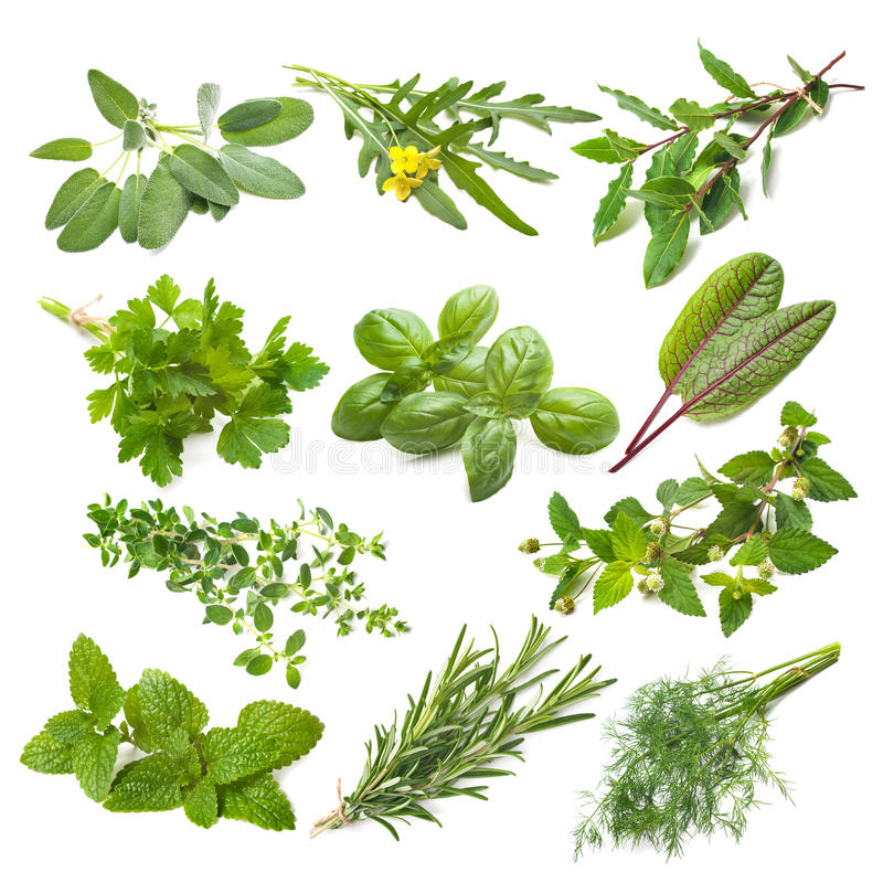 Free Kitchen Herbs Collection Royalty Free Stock Photography - 51406007