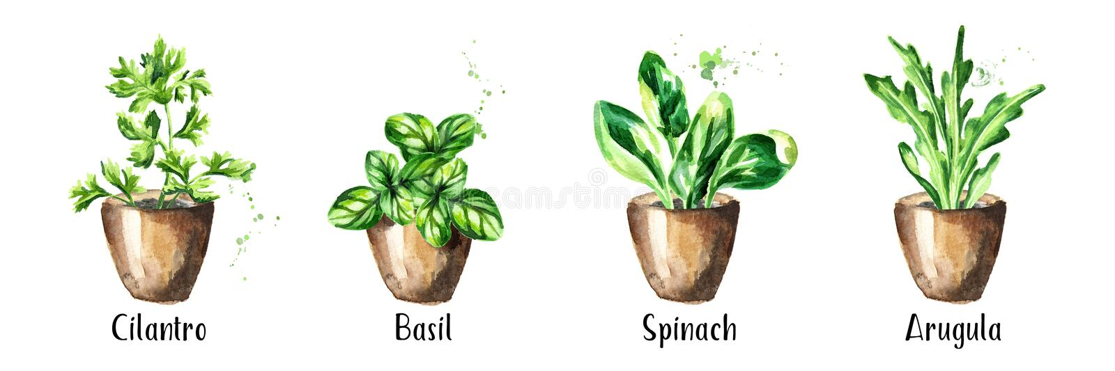 Kitchen herbs in a pots set. Watercolor hand drawn illustration, isolated on white background.  stock photo
