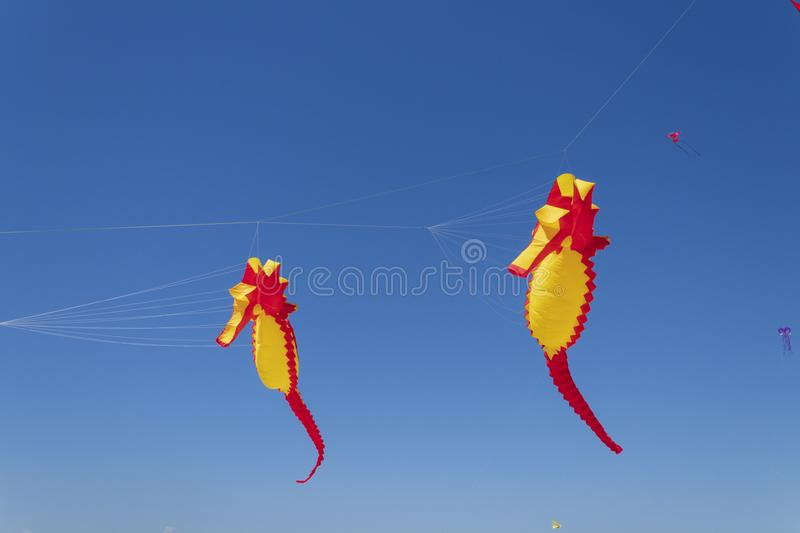 Kite competition on a sunny hot day royalty free stock photos