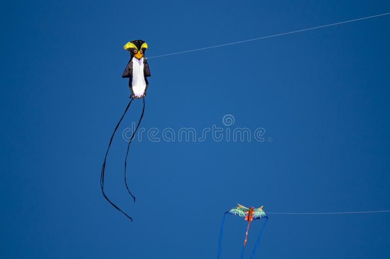 Kite competition on a sunny hot day royalty free stock photography