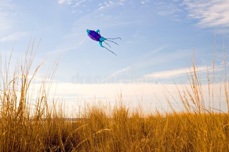 Kite Flying on the Beach-2 stock photo