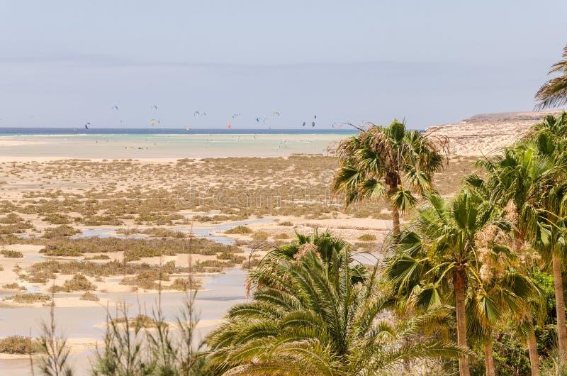 Kiteboarding in the lagoon. Kites sailin the lagoon on the beach and green palms stock image
