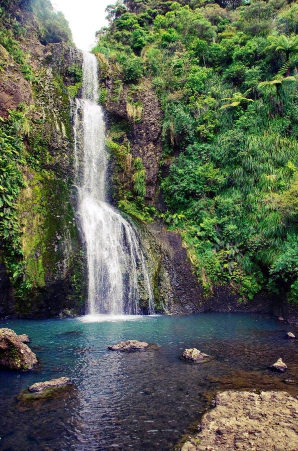 Kitekitedalingen van Nieuw Zeeland Mooie mening van verbazende watervallen in het midden van de aard royalty-vrije stock foto's