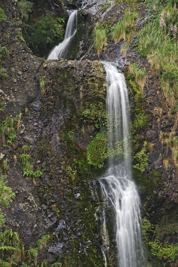 Kitekitedalingen, Waitakere-Waaiers Regionaal Park, Nieuw Zeeland royalty-vrije stock afbeeldingen