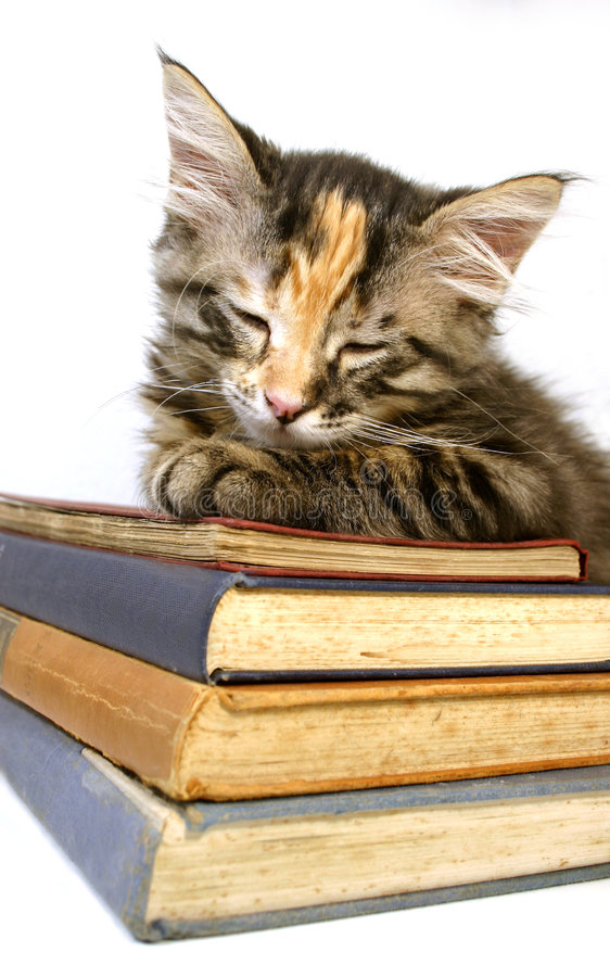 Kiten asleep on old books stock photo