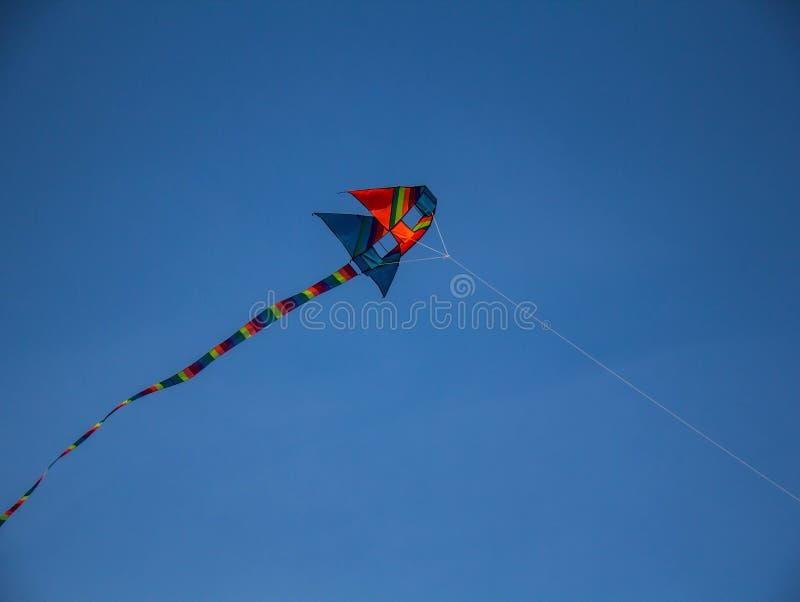 kites fotografie stock